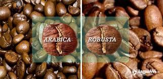 perbedaan-arabica-robusta